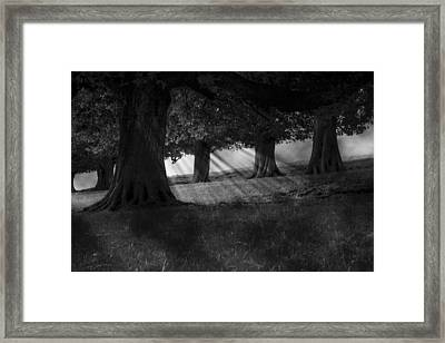 Framed Print featuring the photograph Wood I Dream by Stewart Scott
