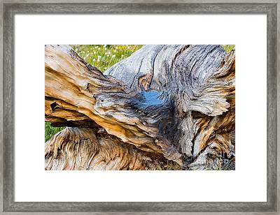 Wood Patterns In Summer Framed Print