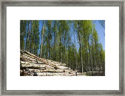 Wood Pile At Springtime Framed Print