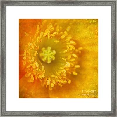 Wood Poppy Framed Print by Darren Fisher