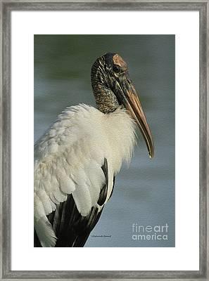 Wood Stork In Oil Framed Print by Deborah Benoit