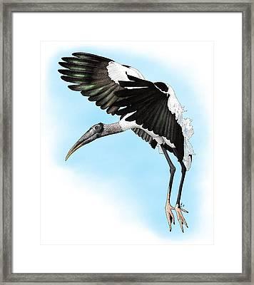 Wood Stork Framed Print by Roger Hall