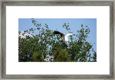 Framed Print featuring the photograph Wood Stork by Ron Davidson
