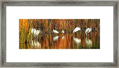 Wood Storks And 2 Ibis Framed Print