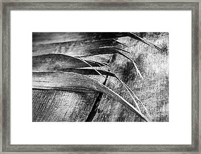 Wood Whispers Framed Print