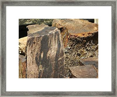 Wood You Framed Print by Tim Townsend