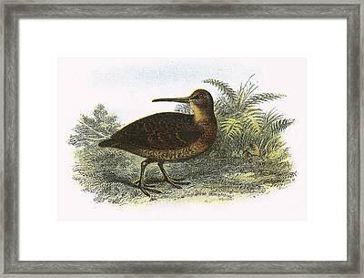 Woodcock Framed Print by English School