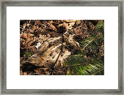 Woodcock   Sitting Tight Framed Print by Sandra Updyke