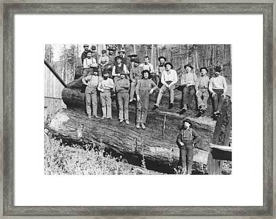 Woodcutters In California, 1891 Bw Photo Framed Print