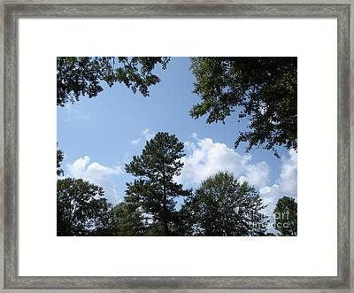 Wooded Forest  Framed Print
