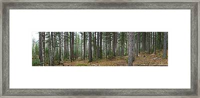 Wooded Panorama In Our Northeast Framed Print
