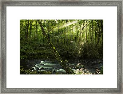 Wooded Rays Framed Print by Andrew Soundarajan