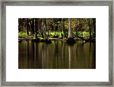 Wooded Reflection Framed Print by Karol Livote