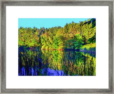 Wooded Shore Through Reeds Framed Print
