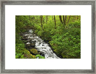 Wooded Stream In The Spring Framed Print