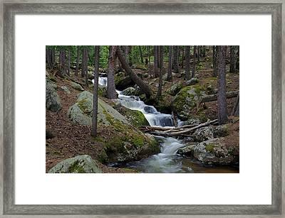 Wooded Stream Framed Print