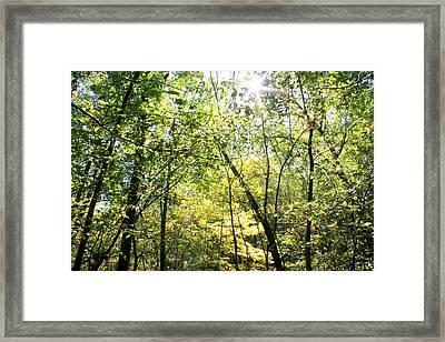 Wooded Sunshine Framed Print