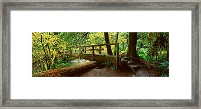 Wooden Bridge In The Hoh Rainforest Framed Print by Panoramic Images