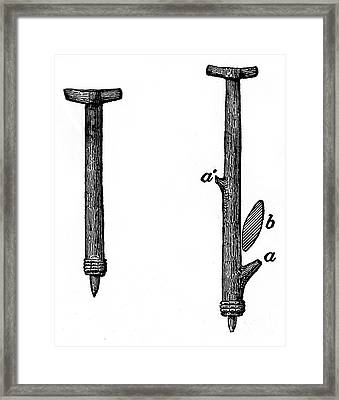 Wooden Flaking-tools, American Indian Framed Print