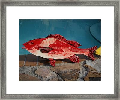 Wooden Red Snapper Framed Print by Val Oconnor