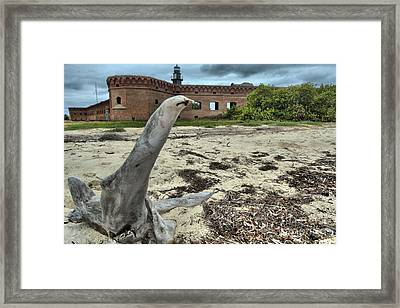 Wooden Seal Framed Print by Adam Jewell