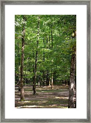 Woodforest 2013 Framed Print by Maria Urso