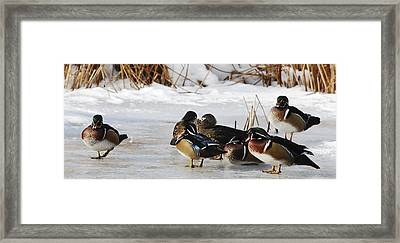 Woodies On Ice Framed Print by Thomas Pettengill