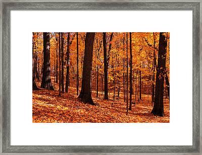 Woodland Bliss Framed Print by Rachel Cohen