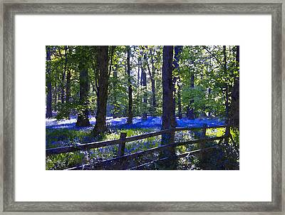 Woodland Bluebells Framed Print by Scott Carruthers
