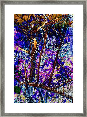 Woodland Framed Print by Carol Lynch