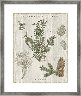 Woodland Chart II Framed Print by Sue Schlabach