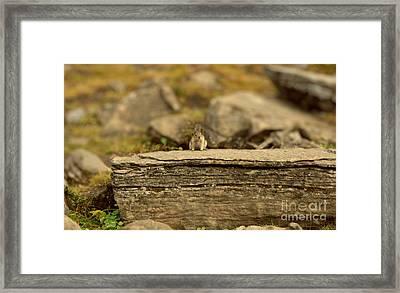 Woodland Critter Framed Print