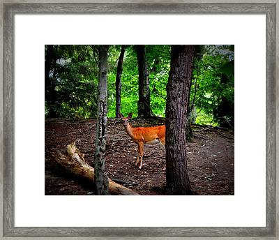 Woodland Deer Framed Print