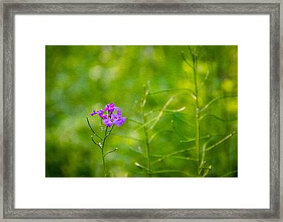Woodland Dream 3 Framed Print