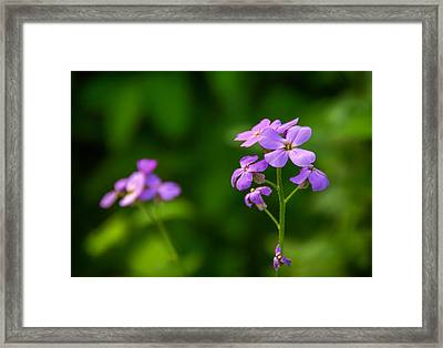 Woodland Dream Framed Print by Steve Harrington