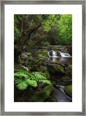 Woodland Falls Framed Print by Bill Wakeley