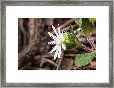 Woodland Flower 20 Framed Print