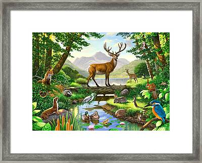 Woodland Harmony Framed Print by Chris Heitt