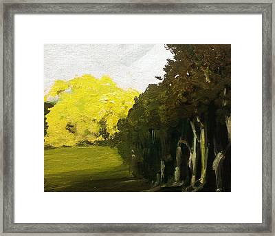 Woodland Light Framed Print by Paul Mitchell