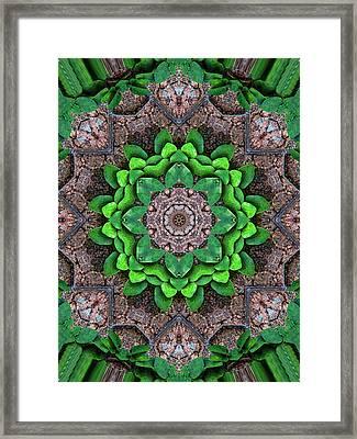Woodland Morning 6 Framed Print by Wendy J St Christopher