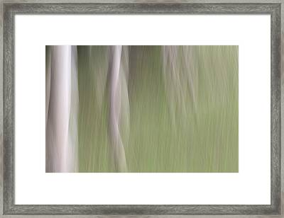 Woodland Nymphs Framed Print