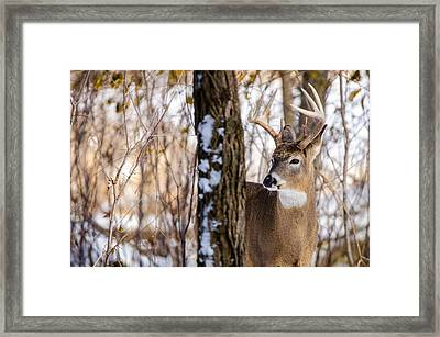 Framed Print featuring the photograph Woodland Outlaw by Steven Santamour