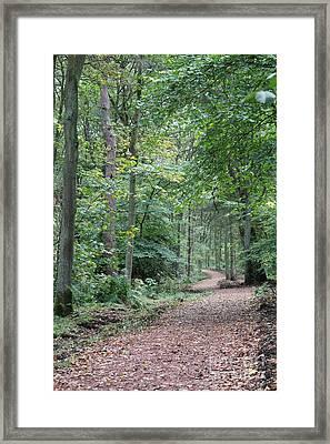 Woodland Path Framed Print by David Grant