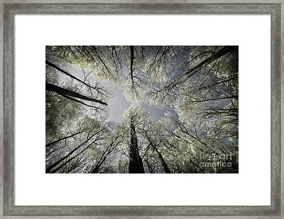 Dreamy Trees Framed Print