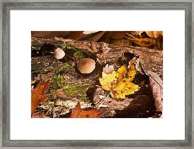 Woodland Scene 1 Framed Print by Douglas Barnett