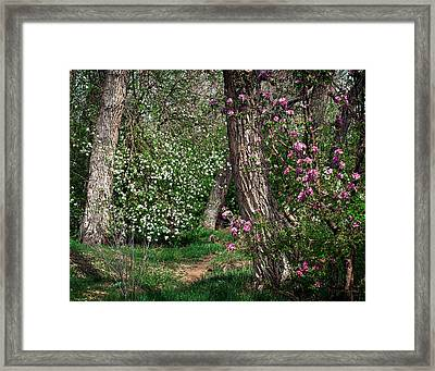 Woodland Spring With Cherry Blossoms Framed Print by Julie Magers Soulen