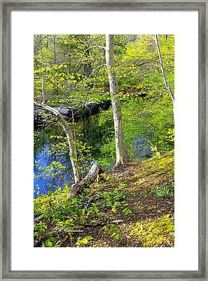 Woodland Stream In Spring Framed Print by A Gurmankin