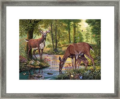 Woodland Stream Framed Print by Steve Read
