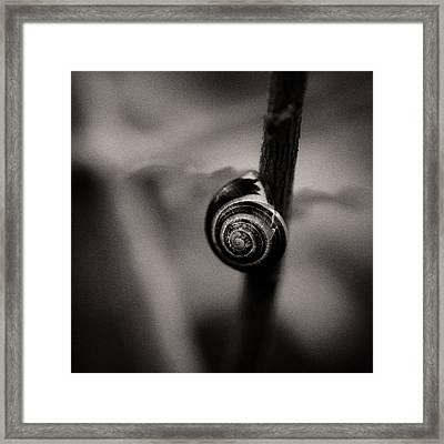 Woodland - Study 11 Framed Print by Dave Bowman