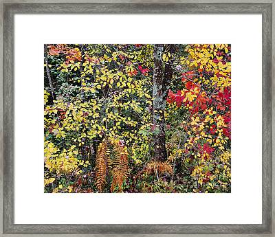 Framed Print featuring the photograph Woodland Tapestry by Alan L Graham